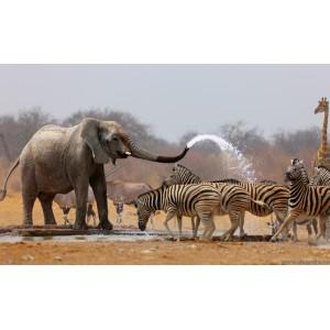 Fotótapéta Szafari 1