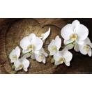 Fotótapéta Orchidea fehér