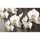 Fotótapéta Orchidea fehér 2 L