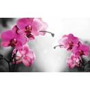 Fotótapéta Orchidea ciklámen 1 L 1