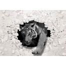 Fotótapéta Tigris - a tégla fal  3D