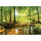 Fotótapéta erdő Béke 2