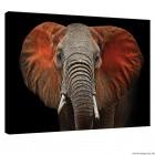 Vászonkép Elefánt  - művészet