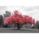 Fotótapéta rózsaszín