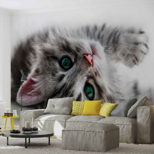 Fotótapéta 3D Kitty