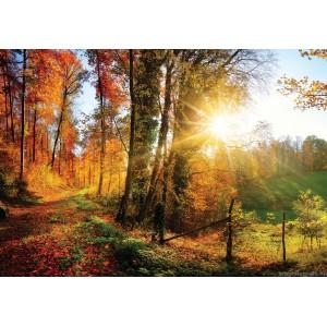 Fotótapéta Őszi erdő 1 L 1