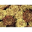 Fotótapéta Vintázs  rózsák 3D L