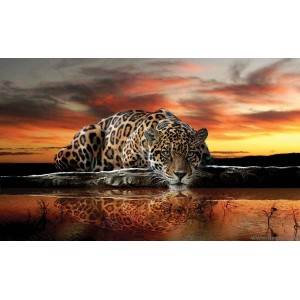 Fotótapéta Leopárd 2
