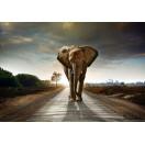 Fotótapéta Elefánt