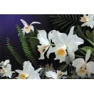 Fotótapéta vad orchidea