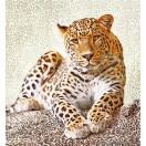 Fotótapéta Leopárd