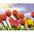 Fotótapéta Tulipánok