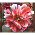 Fotótapéta rózsaszín  pünkösdi rózsa