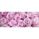 Fotótapéta lila rózsák Vlies