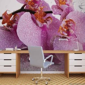 Fotótapéta Orchidea cseppek