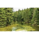Fotótapéta paradicsomi erdő L 1