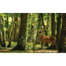 Fotótapéta Szarvas a fák között