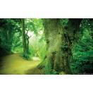 Fotótapéta Út az erdőben  3D