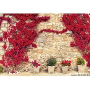 Fotótapéta Fal piros virágokkal 1
