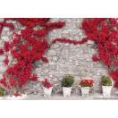Fotótapéta Fal  piros virágokkal  2 XL