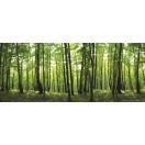 Fotótapéta Nézd meg az erdőt 4XL Vlies
