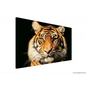 Vászonkép Tigris 2 3D