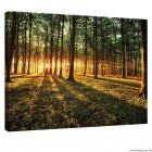 Vászonkép erdő 1 L