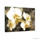 Vászonkép Orchidea 2