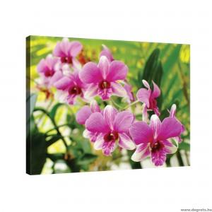 Vászonkép Orchidea 3