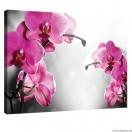 Vászonkép Orchidea Ciklámen 1