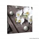 Vászonkép Orchidea 5
