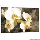 Vászonkép Orchidea 8