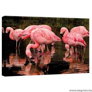 Vászonkép Flamingó 2