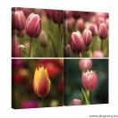 Vászonkép szett 4 darabos Tulipánok 3