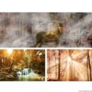 Vászonkép szett 3 darabos erdő Tündérmese