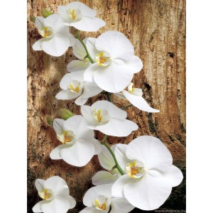 Fotótapéta Orchidea 3D