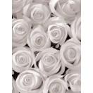 Fotótapéta fehér rózsák 3D