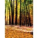 Fotótapéta Őszi erdő 2