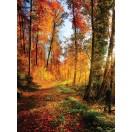 Fotótapéta Őszi erdő 1 L 2