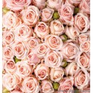 Fotótapéta Rózsacsokor 2