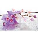 Fotótapéta Orchidea ciklámen 2